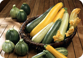 j &l seeds courgette seeds
