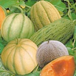 j and l melon seeds