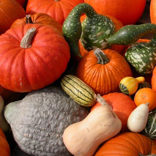 j & l pumpkin seed