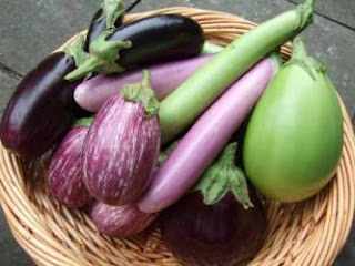 j and l aubergine seeds